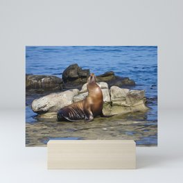 Sea Lion on the rocks off the Pacific California Coast on La Jolla Beach Mini Art Print