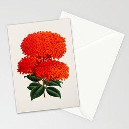 Vintage Scientific Flower Illustration Large Red Flowers Large Orange Petals Stationery Cards