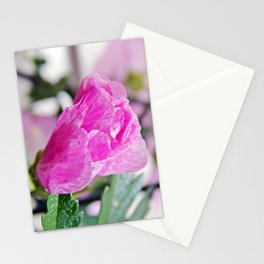Pink Musk Mallow Rolled-up Stationery Cards