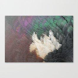 woodpigeon neck  detail feathers veren detail houtduif Canvas Print