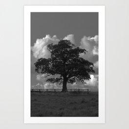 Tree in a Field Art Print