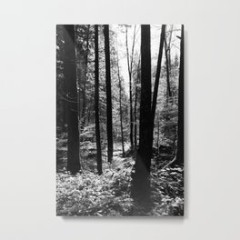 Forest black and white 13 Metal Print