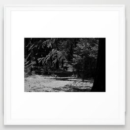 black bear in yosemite Framed Art Print