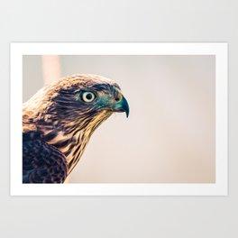 Avian Art Print