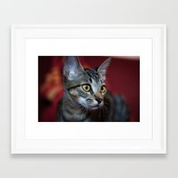 nori Framed Art Prints featuring Nori by Yvo Photography