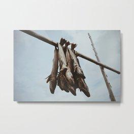 Drying fish in Lofoten Metal Print