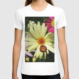 Asteraceae / Daisy . 2 T-shirt