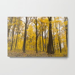 Fall Has Arrived Metal Print