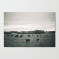 cows Canvas Prints featuring Cows by Christopher Morley
