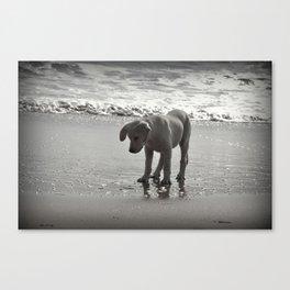 Dog & Bubbles Canvas Print