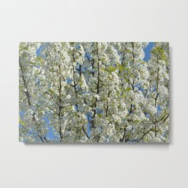 White Flowering Tree Metal Print
