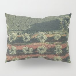 Aerial photo, nature textures, drone photography, olive trees, Apulia, Italian countryside Pillow Sham