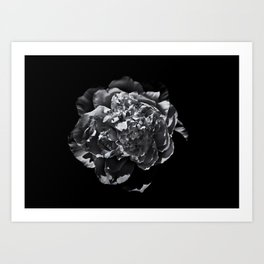 Backyard Flowers In Black And White 19 Art Print