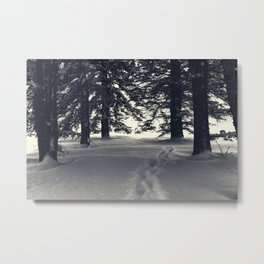 Spruce Trees with Footpath in Powder Snow Metal Print