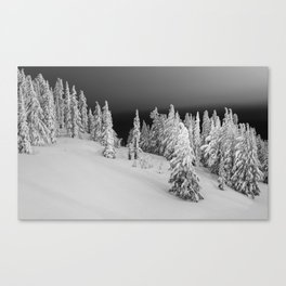 Timberline Night. Canvas Print