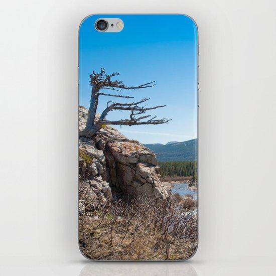 Windswept tree iPhone & iPod Skin