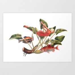 Diver in the Lilies Art Print