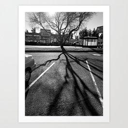 Shadow Tree - Pacific Northwest Art Print