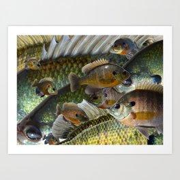 Bluegill Kaleidoscope 3 Art Print