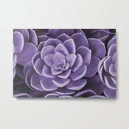 succulent Blossom violet color Metal Print