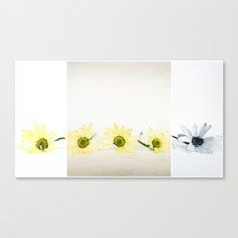 Little Daisies in a Row Canvas Print