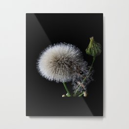 blow flower - 113 Metal Print
