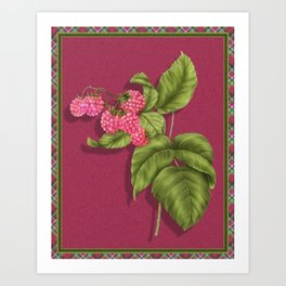 Juicy Pink Raspberries Art Print