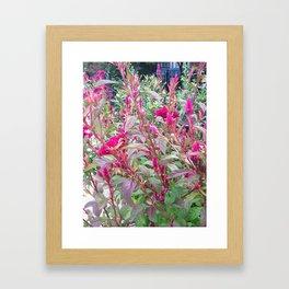 Beauty Framed Art Print