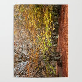 Colorful autumnal forest Poster