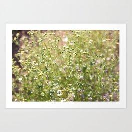 Arizona Mountain Blooms  Art Print