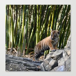 Little Tiger Big World Canvas Print