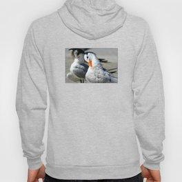 Royal Terns Hoody