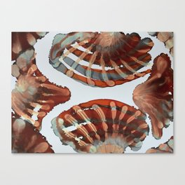 Coco's Seashells Canvas Print