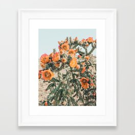 Cholla, Orange Flowering Cactus Framed Art Print
