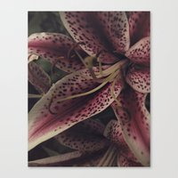 lily Canvas Prints featuring lily by inourgardentoo