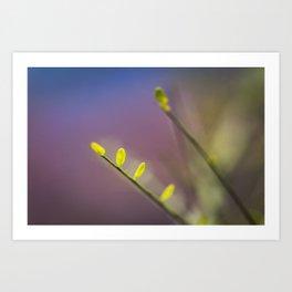 Springtime Tree Blossoms Flowers Macro Photo Art Print