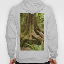 Old Growth Tree Roots Forest Woods Washington Northwest Boulder Geology Outdoors Landscape Hoody