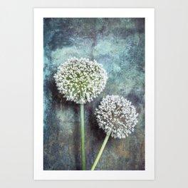 Allium Flowers Art Print