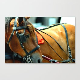 Horse in Amsterdam Canvas Print