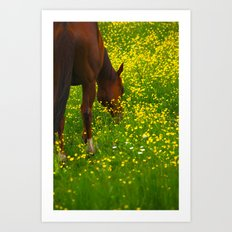 Enjoying The Wildflowers Art Print