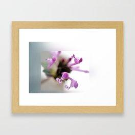 Labiate flowers Framed Art Print