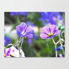 Two Faces Of Purple Canvas Print