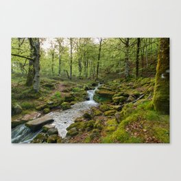 Green Stream Wide Canvas Print