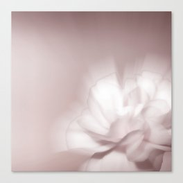 Pink whisp Canvas Print