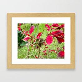 Mini Bird's Nest Framed Art Print