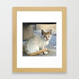 Kitten under a car Framed Art Print