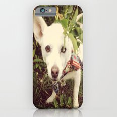 Looking Lobo iPhone 6s Slim Case