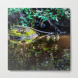 Eight Mallard ducklings Metal Print