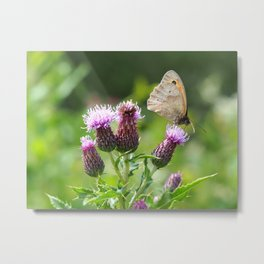 Meadow Brown Butterfly on a Thistle Metal Print