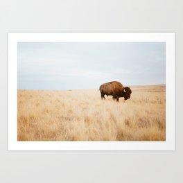 Bison Plaines Art Print